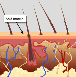acid mantle / acne care / acne solutions / skincare / skin explained / green beauty