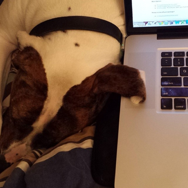 March 29th - when working in my make shift office (shown above), doggie ears occasionally work their way onto my keyboard