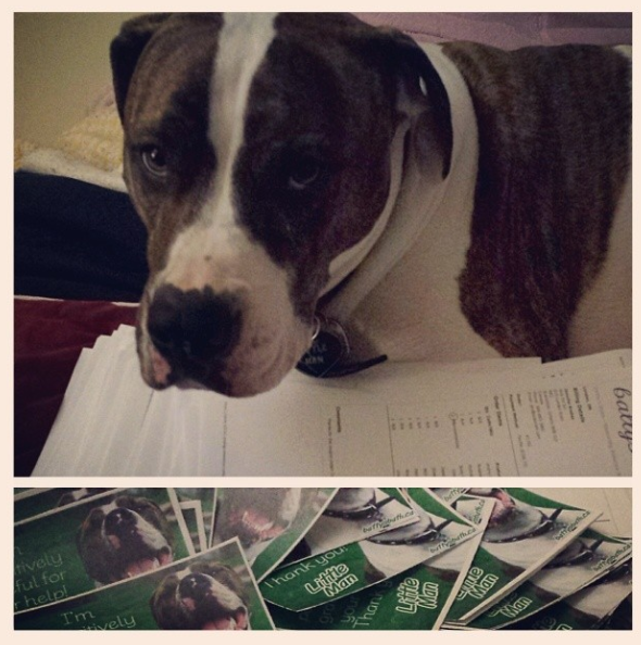 Little man is helping (by mostly supervising) me prep all the orders that have come in for his sale! Thank you so much for the huge outpouring of support! We're well over half way to covering his surgery! (April 5th)