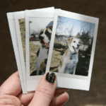 The weather was perfect to try out my new instax mini camera! I love how the polaroids turned out! Such a fun little camera. I've been really missing taking insta pix since I ran out of film for my joy cam... and haven't been able to find more at a decent price. The instal mini is a perfect substitute/upgrade. (April 12th)