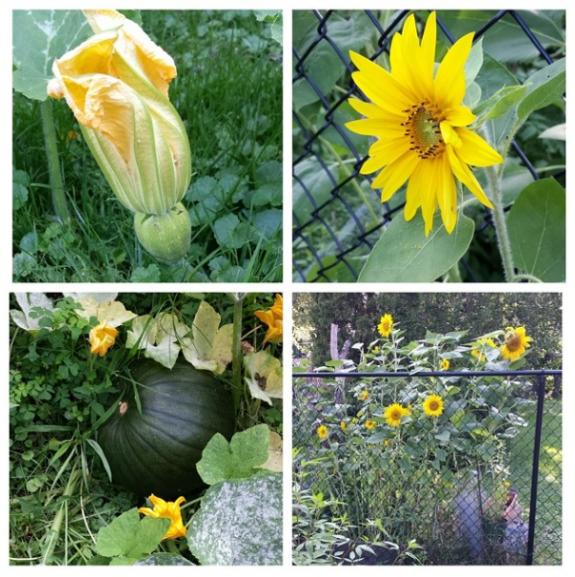 Batty's garden