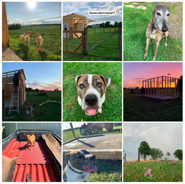Follow Lily's Place Animal Sanctuary on Instagram