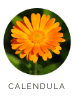 Calendula Foundation