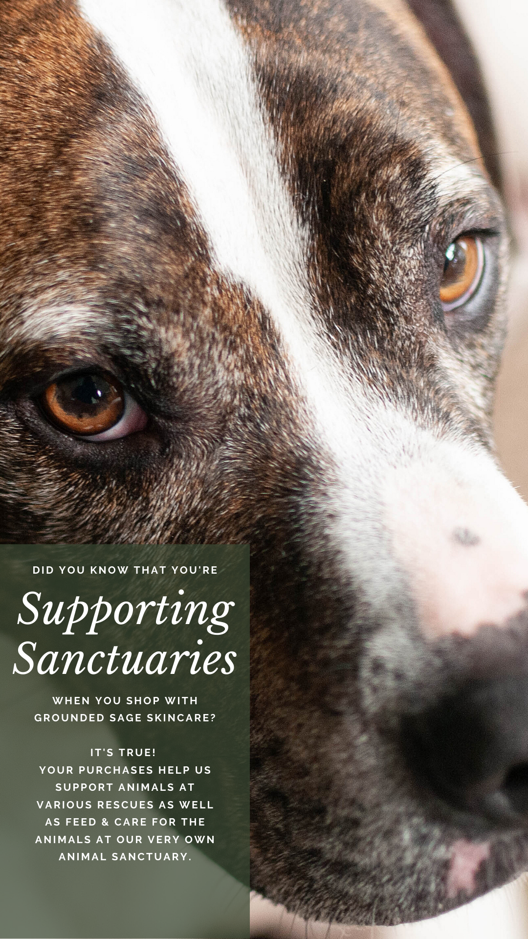 Beauty Brands That Give Back to Charity - Grounded Sage Skincare - Helping Animals - Helps Animal Rescue