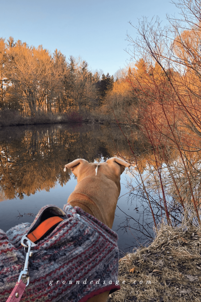 Grounding in nature - hiking with dogs on a nature walk scavenger hunt. Autumn fall activities for connecting with nature and the outdoors in Southwestern (near London) Ontario Canada