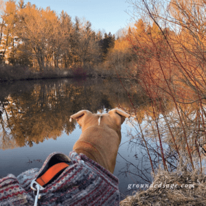 Grounding in nature - hiking with dogs on a nature walk scavenger hunt. Autumn fall activities for connecting with nature and the outdoors