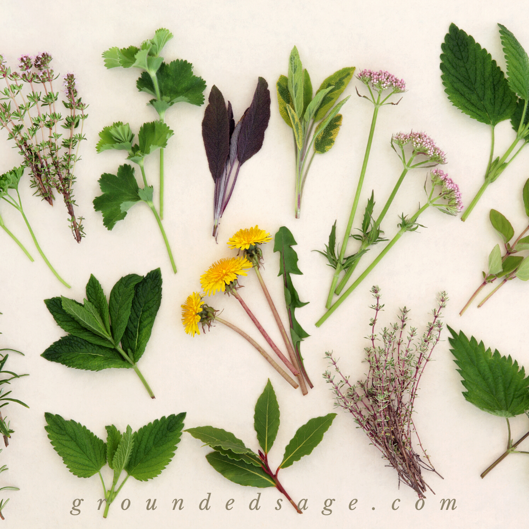 botanical beauty, garden remedies, and herbal wisdom for nature lovers, wise women, and the modern green witch - self care herbal tea natural aesthetic