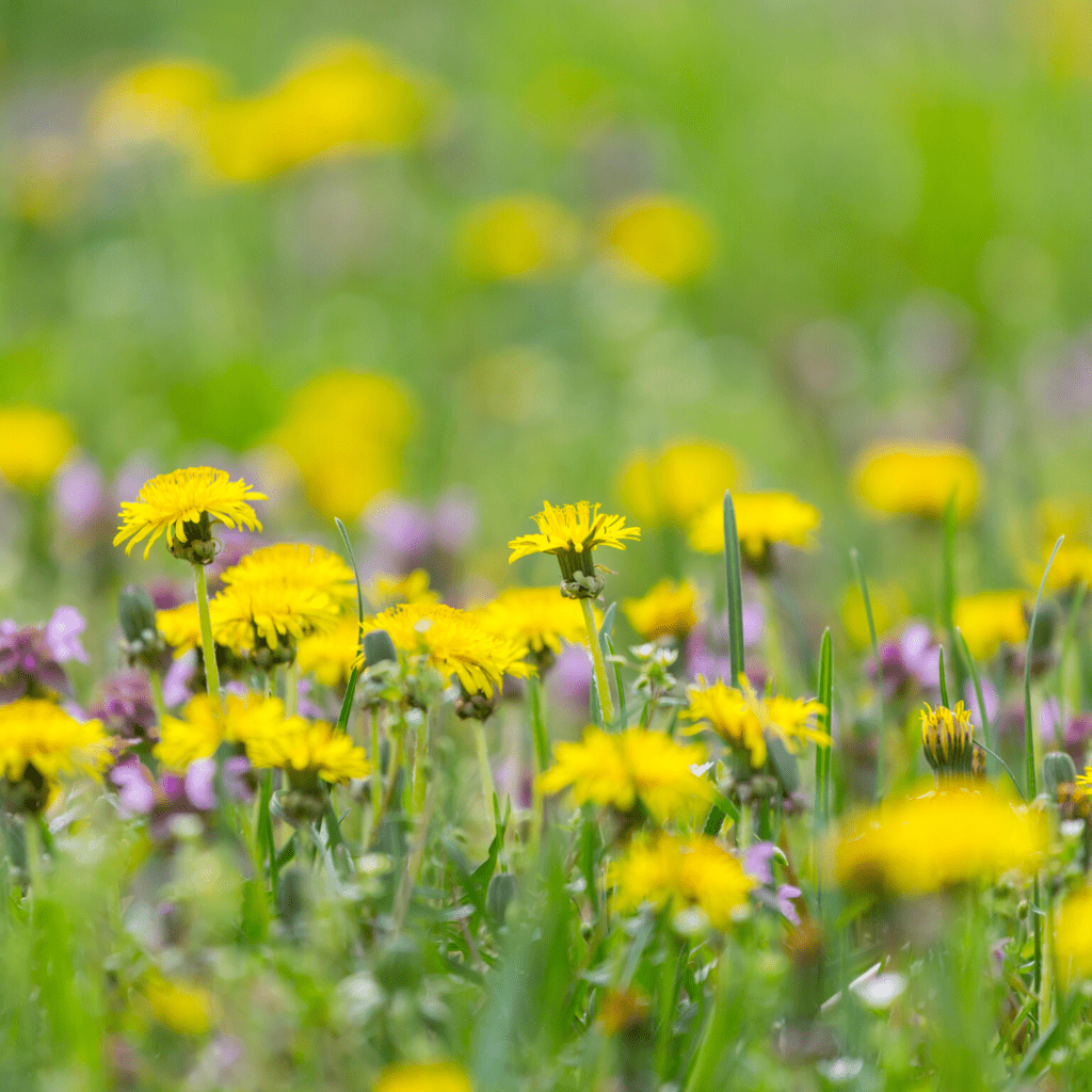 space to grow - moving to greener pastures - wildflowers and wilderness